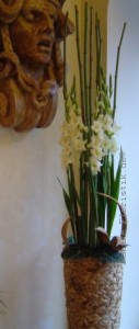 Raumdekoration Gladiole